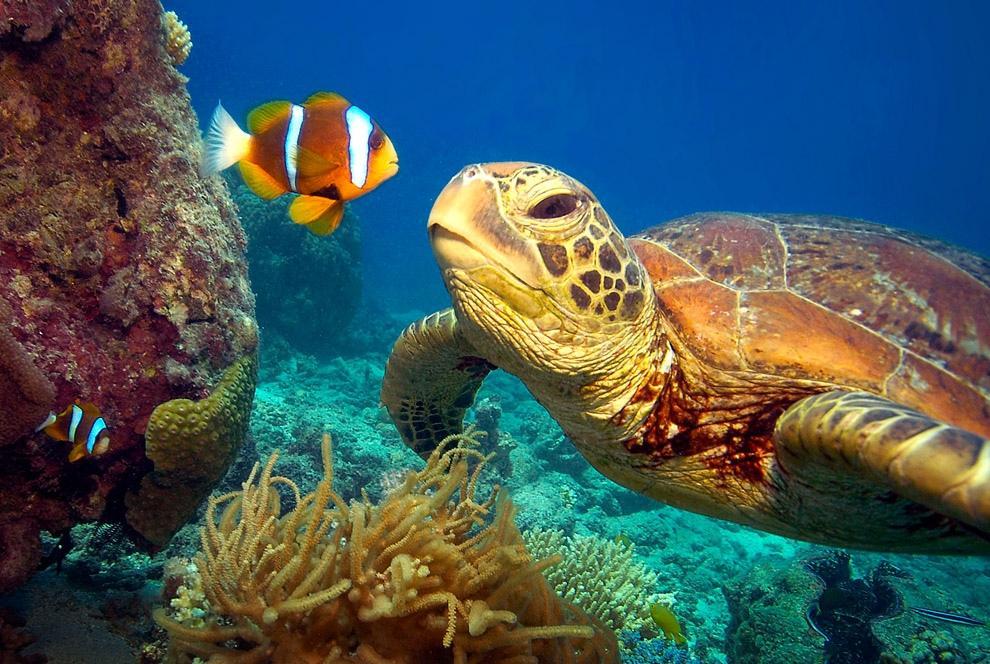 На Кипре появится музей черепах